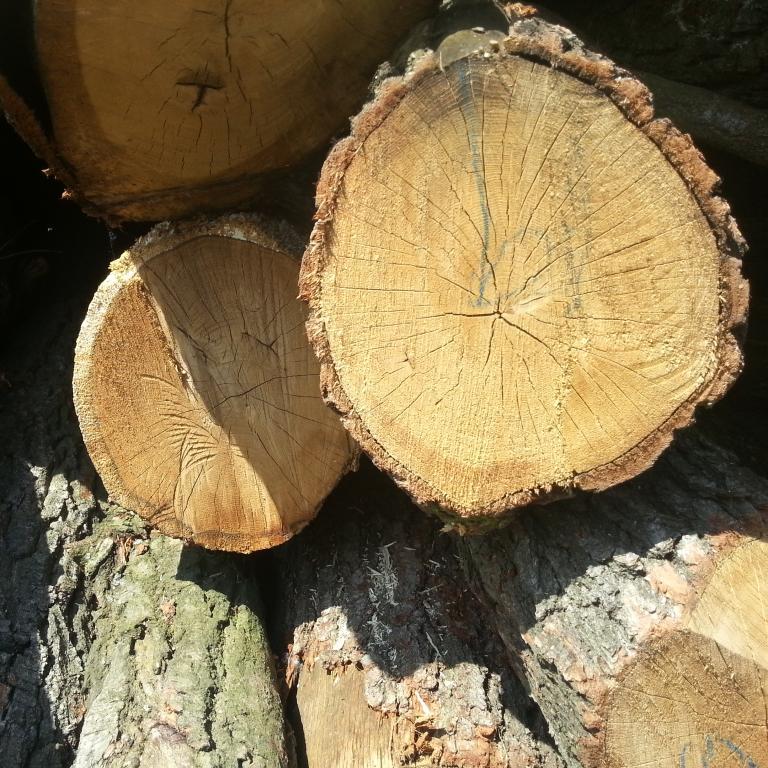 tvrde_drevo