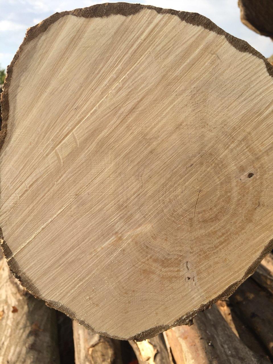 Habr dřevo