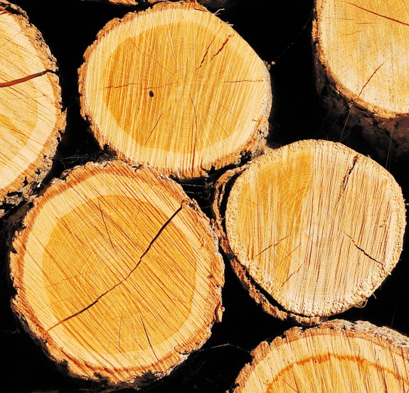 bukove-drevo