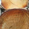palivové dřevo bříza