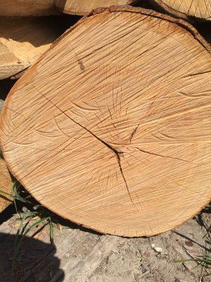 bukové dřevo